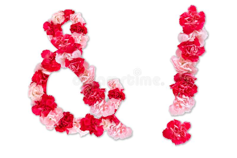 Flower font for symbol exclamation mark, ampersandand collection alphabet A-Z set, made from real Carnation flowers pink, red royalty free stock photography
