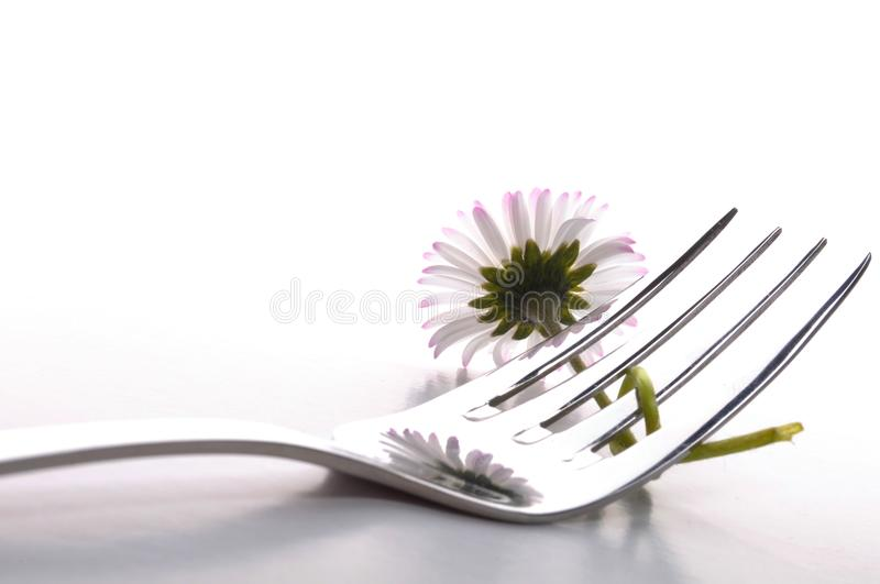 Flower food stock photo