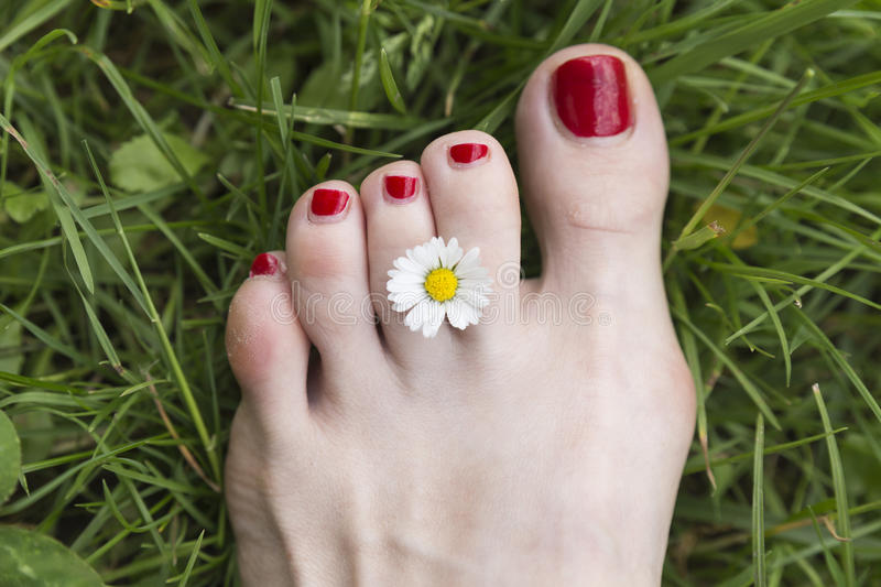 Flower And Foot With Red Nail Polish 2 Stock Photo - Image of ...