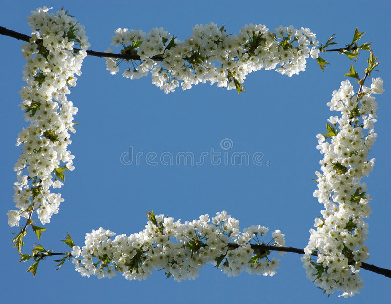 Download Flower frame #01 (normal) stock photo. Image of blossom - 5013226
