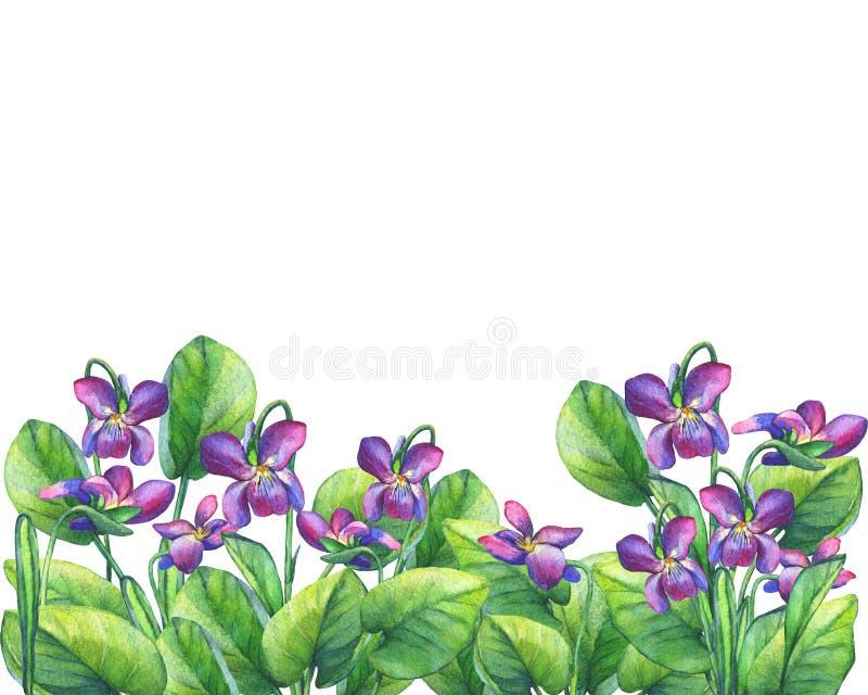 Flower frame of the Fragrant violets English Sweet Violets, Viola odorata royalty free illustration