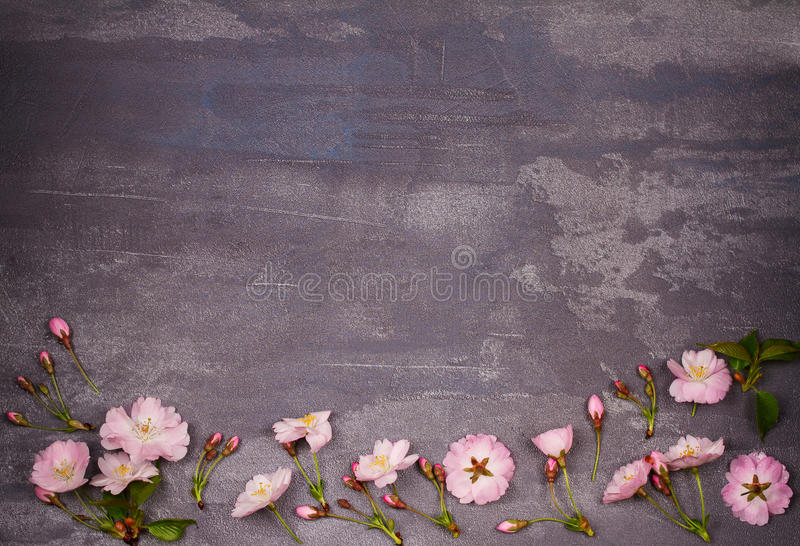 Flower frame on gray shabby chic background. Springtime blooming. Pink spring flowers. Top view with copy space. Flat lay stock images