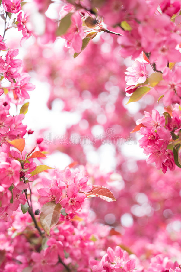 Flower Frame. A flower frame with a nice soft pink bokeh background stock photo