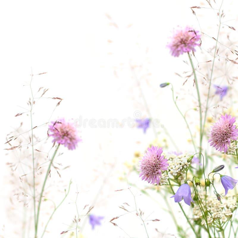 Flower frame - spring or summer background. (shallow depth of field
