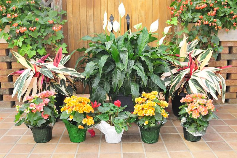Download Flower-garden stock photo. Image of floor, yellow, pretty - 14374194