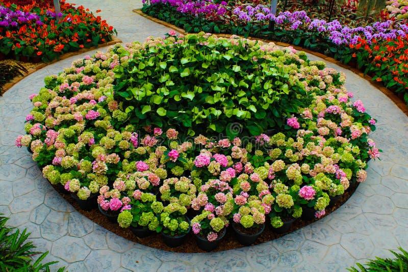 Download Flower garden stock photo. Image of greenery, flower - 25861800