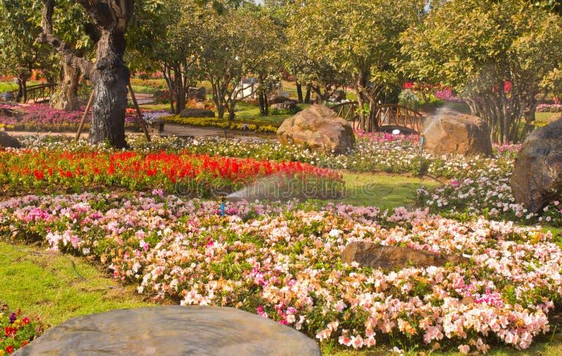 Download Flower garden stock photo. Image of refreshing, grass - 29361490
