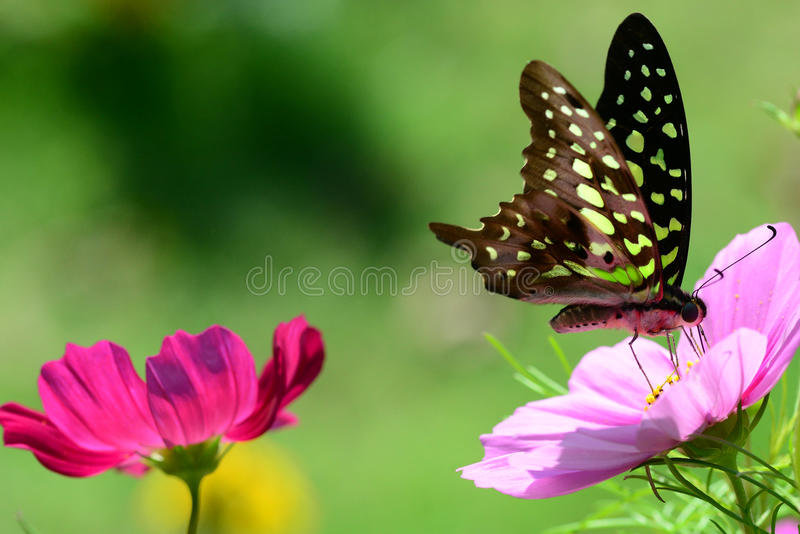 Flower Garden. A colorful butterfly in the flower garden stock photo
