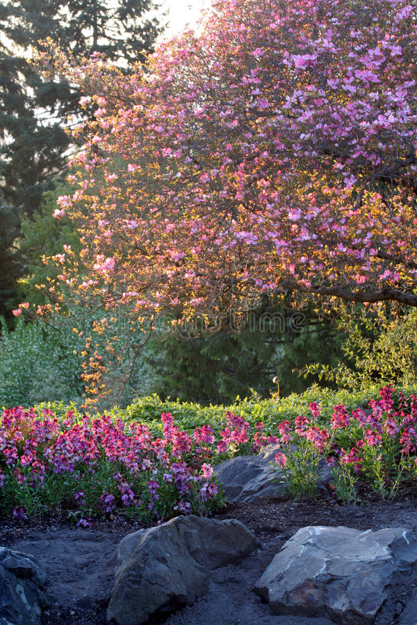 Free Flower Garden Royalty Free Stock Photography - 753857