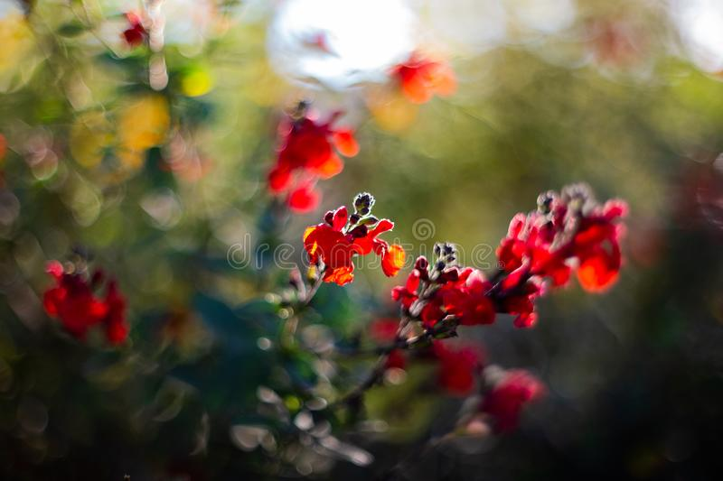 Flower of the garden of the arc of triumph of Barcelona royalty free stock photography