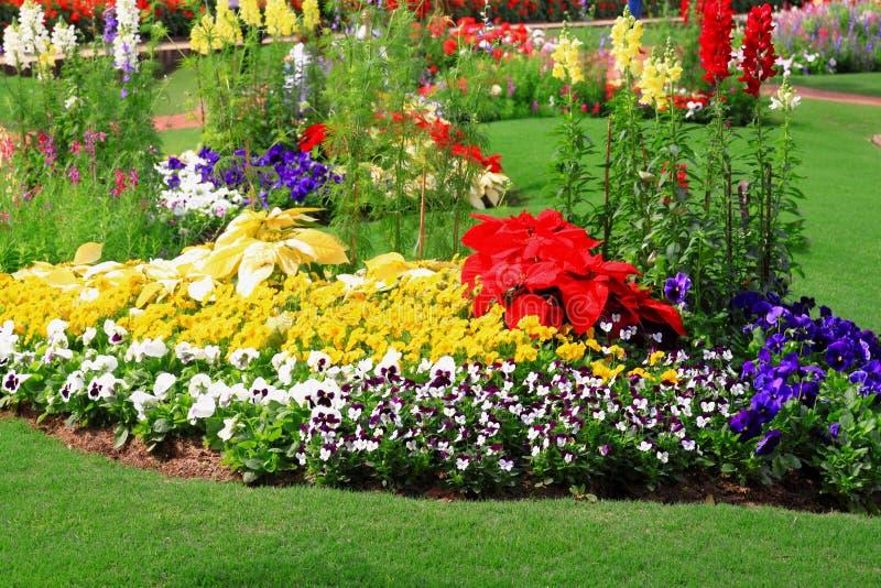 Flower Garden Background Stock Image Image Of Color - Colorful flower garden background