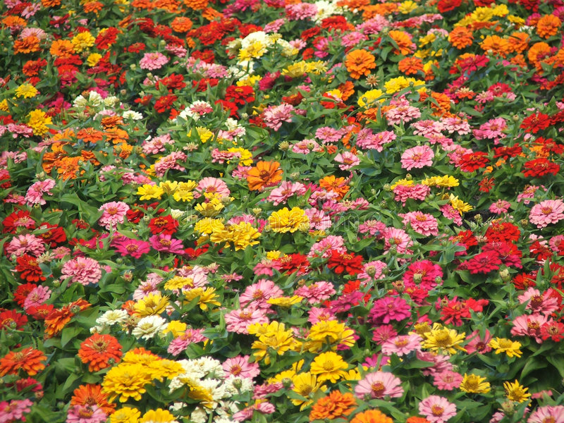 Flower-Garden Bed stock photo