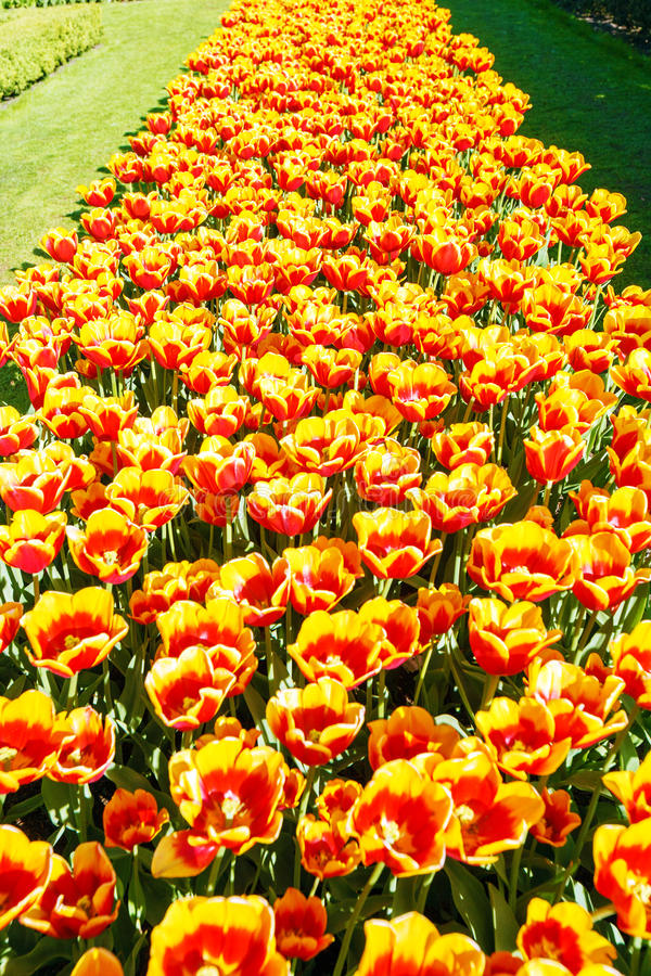 Download Flower Garden Keukenhof, Amsterdam Stock Image   Image: 61153607