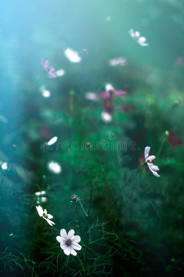 Flower garden in the moonlight - beauty in nature concept. Elegant visuals stock photos