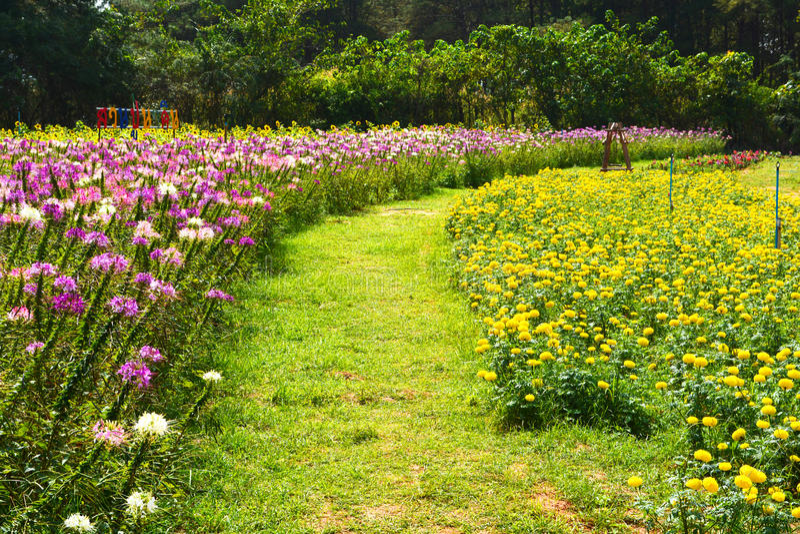 Flower garden. Flower on the garden and nature background stock photos