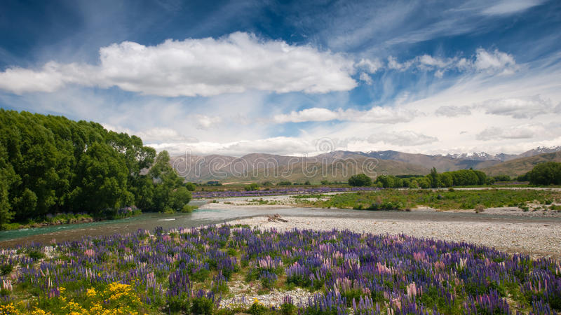 Flower garden, South Island, New Zealand royalty free stock photography