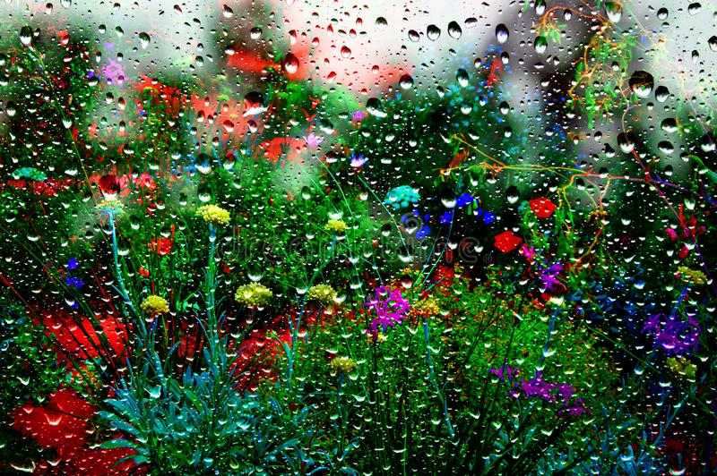 Flower garden in the summer rain. This garden shows grass and highlight coloured flowers in the summer rain through a window pane of glass stock photography