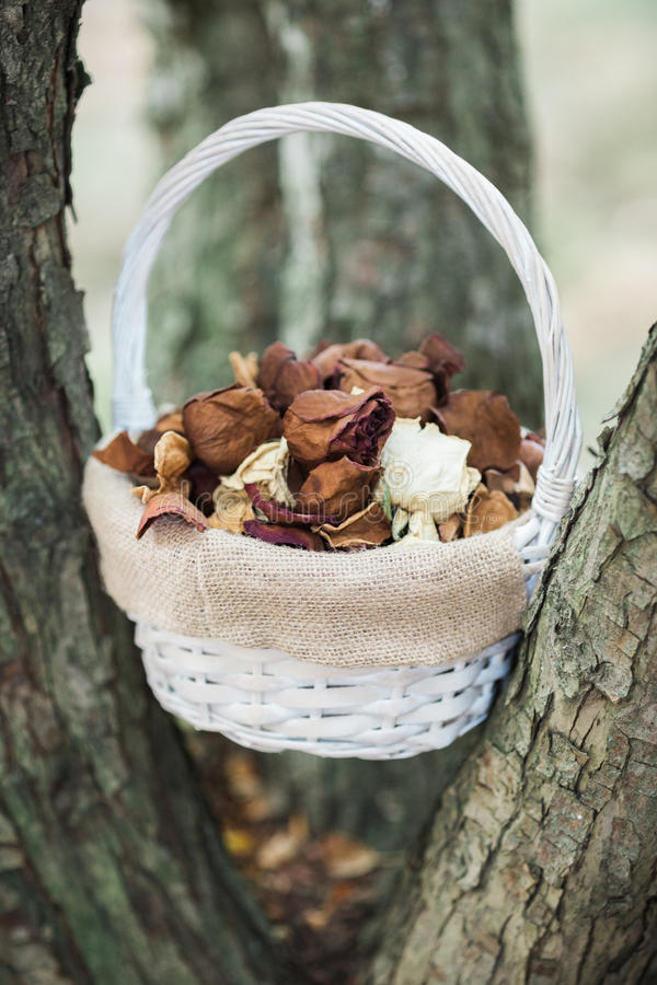 Flower girl basket. In tree with dried rose petals stock photo