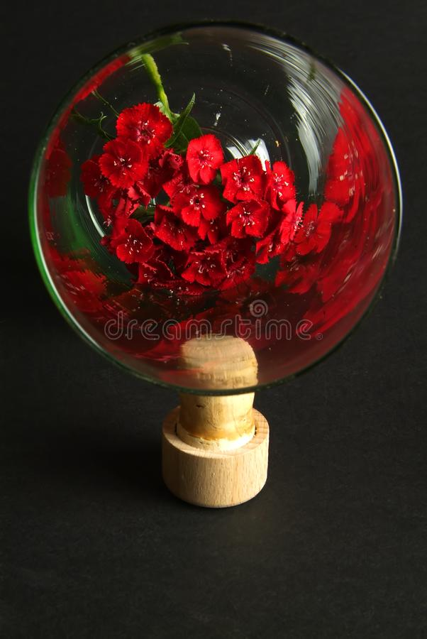 Download Flower in glass stock photo. Image of pink, transparent - 28536006