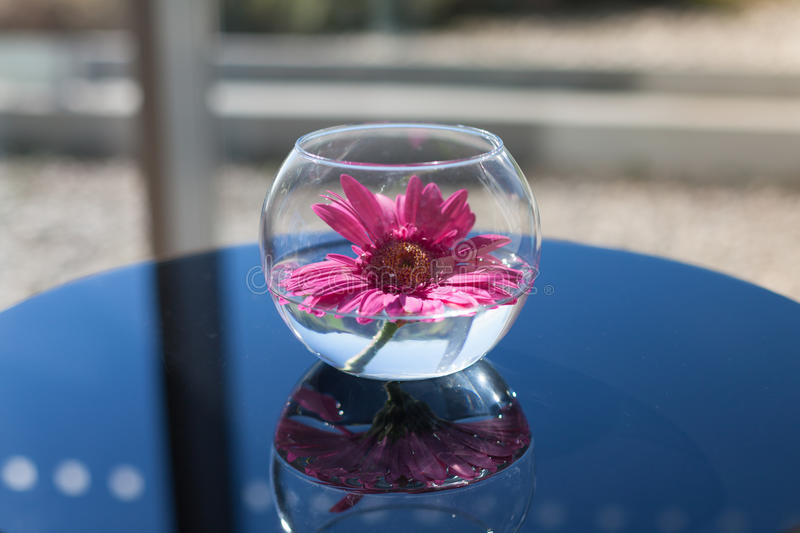 Flower in a glass vase. Pink flower in a glass vase royalty free stock photography
