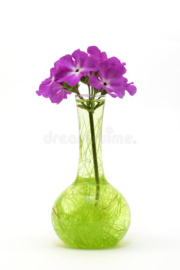 Flower in a glass vase. On white background stock image