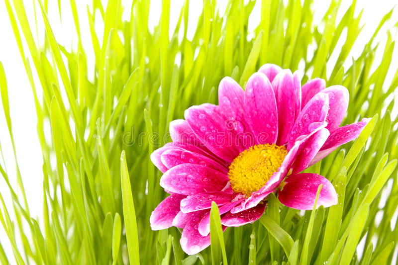 Flower with grass royalty free stock photography