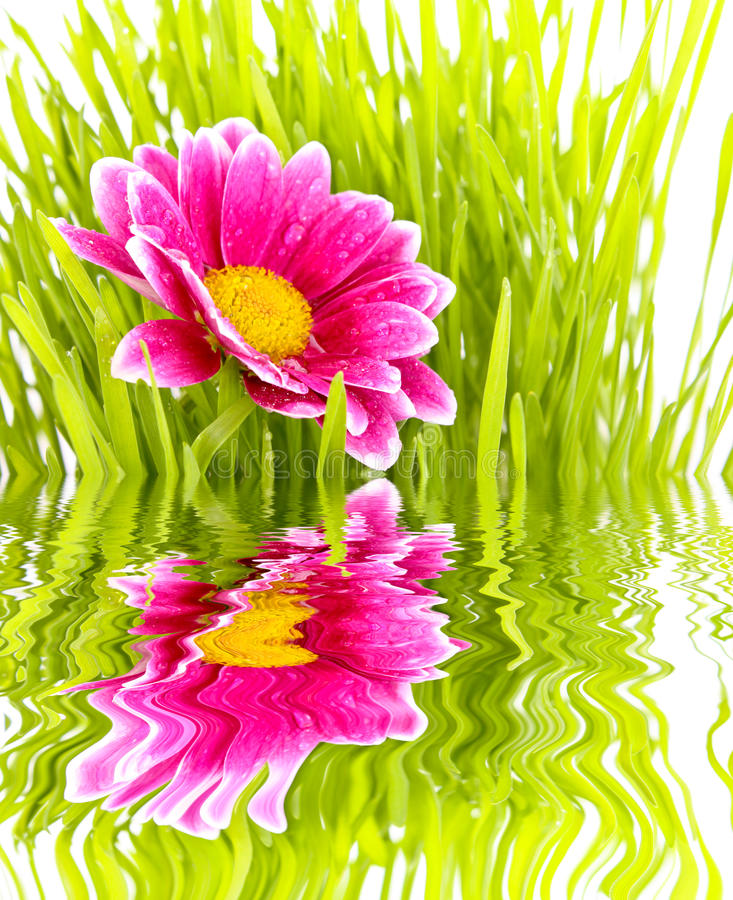 Flower with grass royalty free stock images