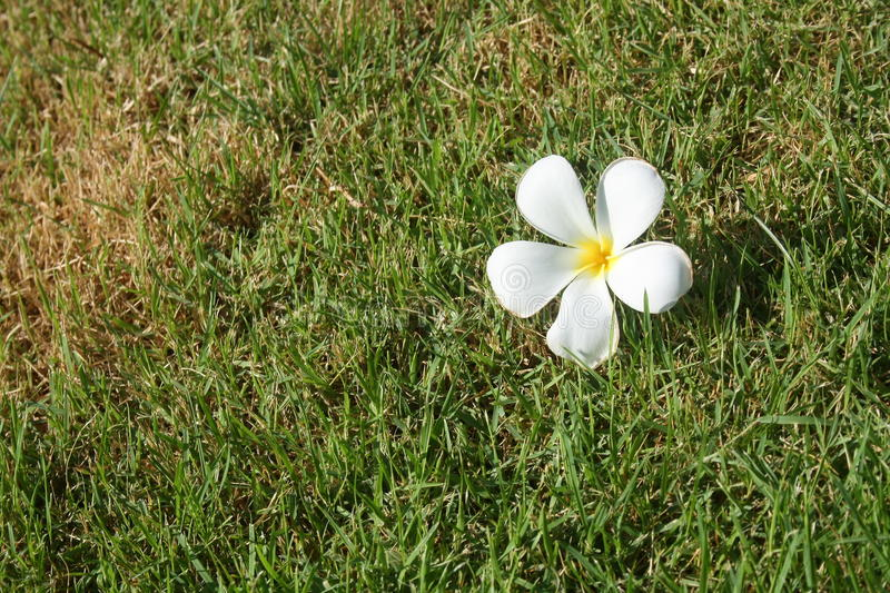 Download Flower On Grass Royalty Free Stock Image - Image: 24808996