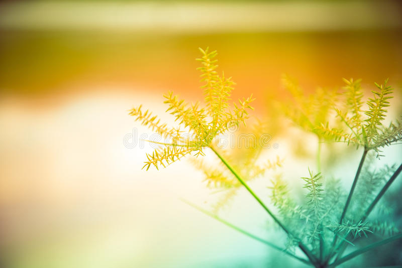 Flower grass. Blur and soft focus of grass flower royalty free stock image