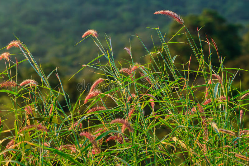 Flower grass royalty free stock images