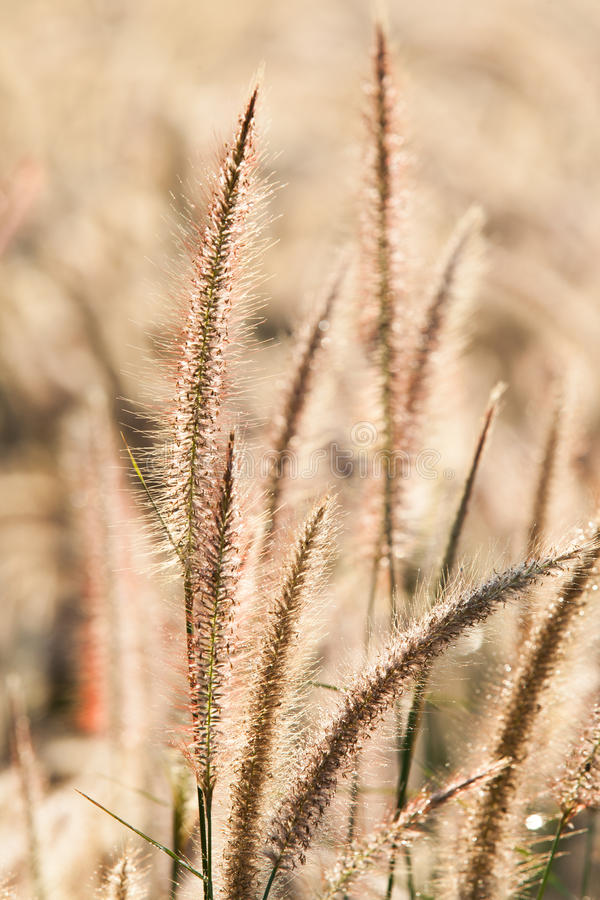 Download Flower of the grass stock photo. Image of autumn, blossom - 37460296