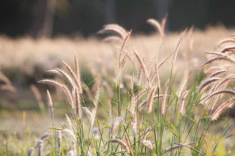 Download Flower of the grass stock photo. Image of field, flora - 37461412