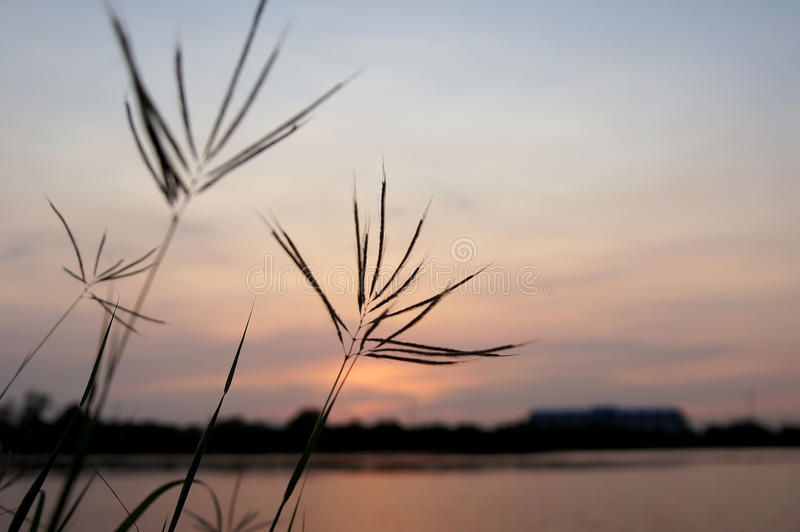 Flower grass and sky evenings Grass and sky.  royalty free stock photo