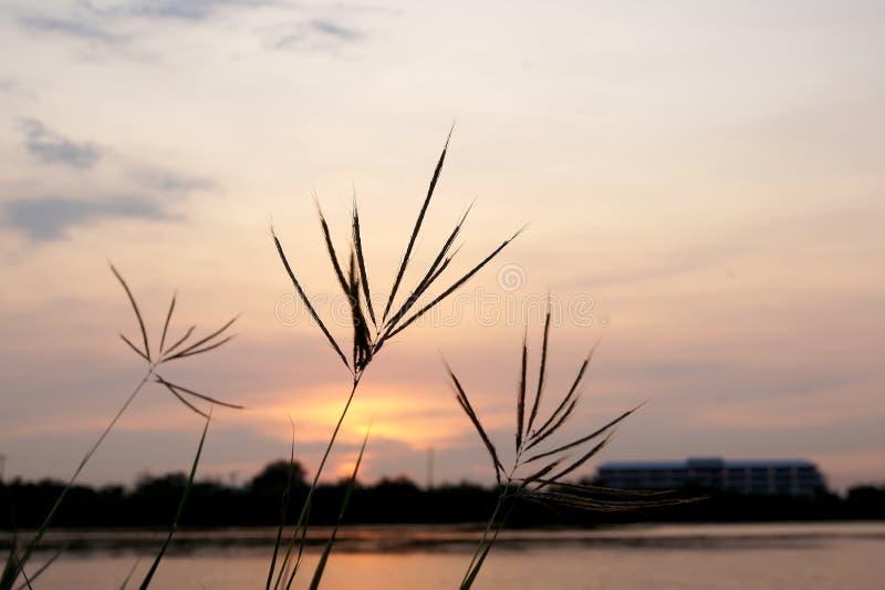 Flower grass and sky evenings Grass and sky.  stock photos