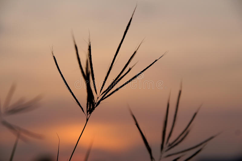 Flower grass and sky evenings Grass and sky.  stock photography