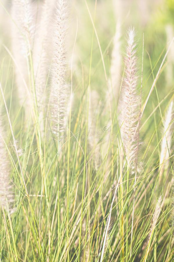 Flower of grass and sunlight stock photo