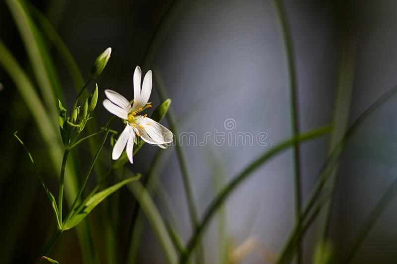 Flower in the grass stock images