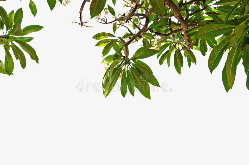 flower Green Leaves border on top of frame isolated white background royalty free stock photos
