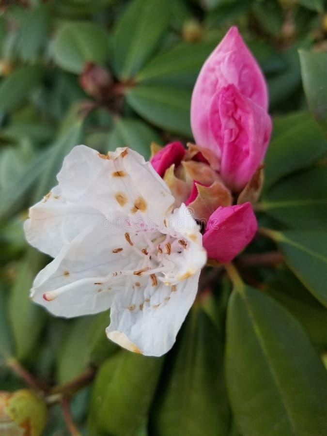 flower green small white royaltyfria bilder