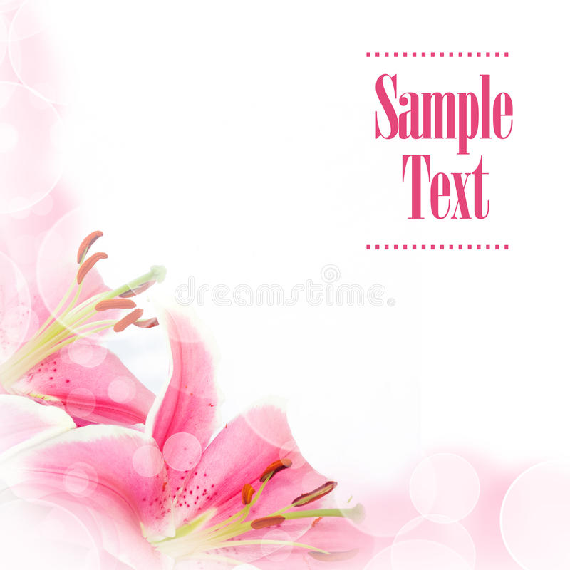 Flower greeting card stock images