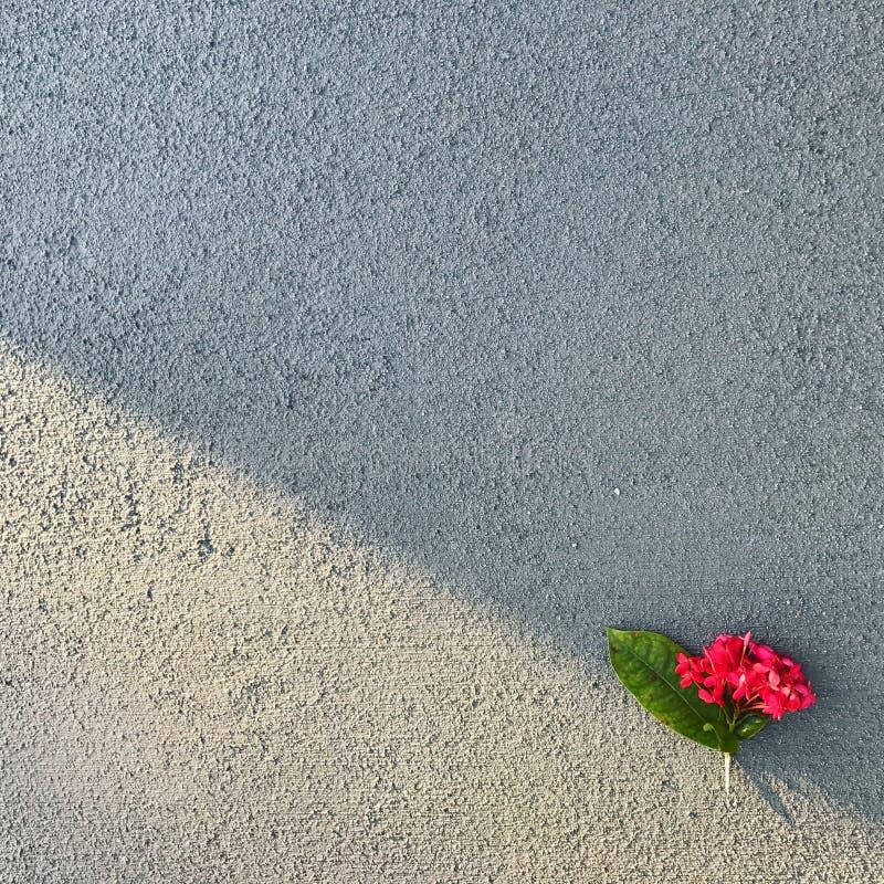 Flower on the Ground, Florida stock image