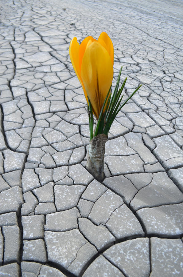 Flower growing in barren land. This is the proof that the earth is fighting to survive in unfriendly places. In return for our ignorance the mother earth is stock image