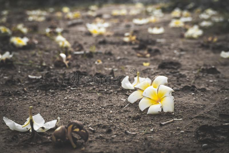 Flower growing on crack street, soft focus, blank text - Image royalty free stock image