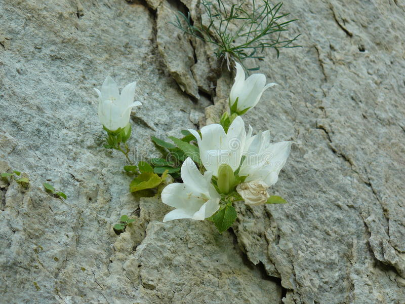 Flower growing on a rock royalty free stock images