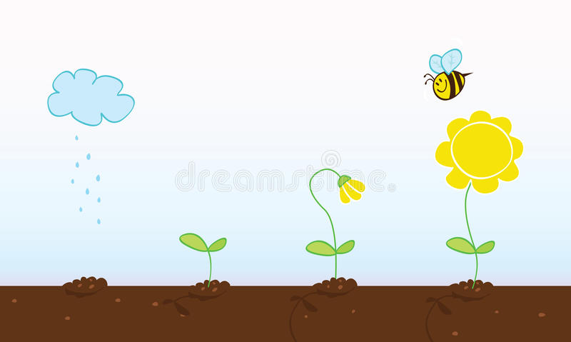 Flower growing stages vector illustration