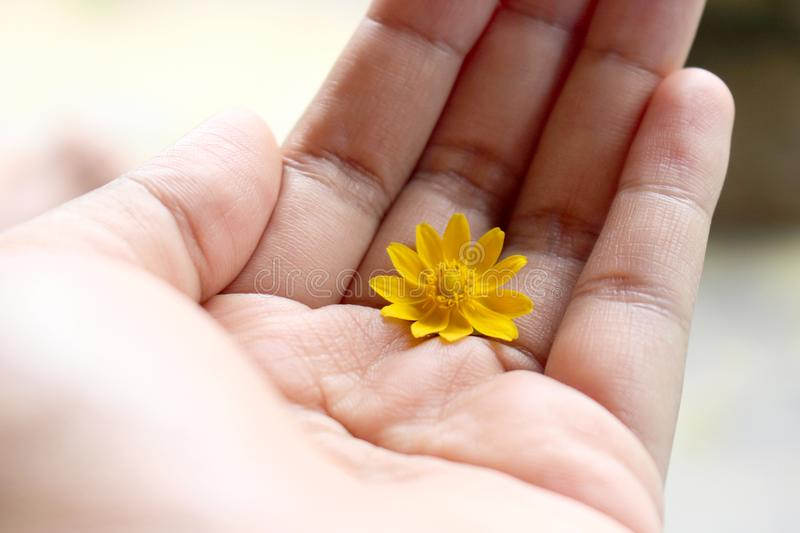 Flower on Hand. A Little Yellow Flower On Top Of Hand in Day Light stock photos