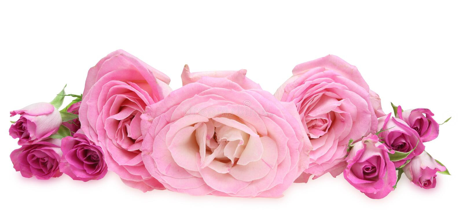 Flower head of roses stock images