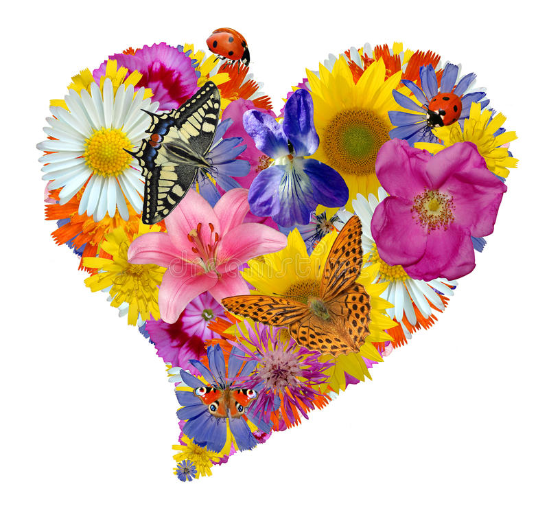 Download Flower heart stock image. Image of graceful, colour, insect - 17590089