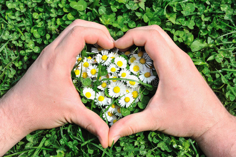 Download Flower heart in grass stock photo. Image of blossom, ecology - 14018212