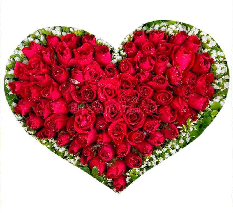 Flower Heart Red Roses Isolated on White Background, Valentines. Day royalty free stock photography